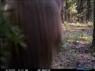 Oregon Game Camera Photo