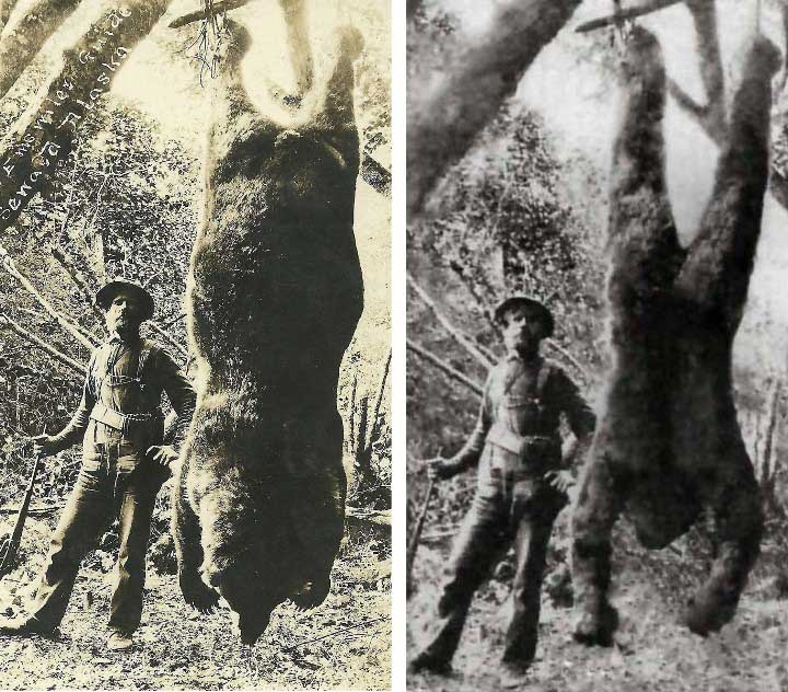 Alaskan-bear-photo-and-dead-bigfoot-photo1a