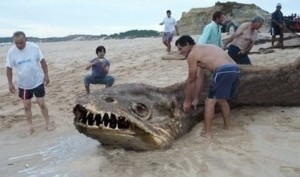 Photoshopped monster fish, full pic, Alan Friswell