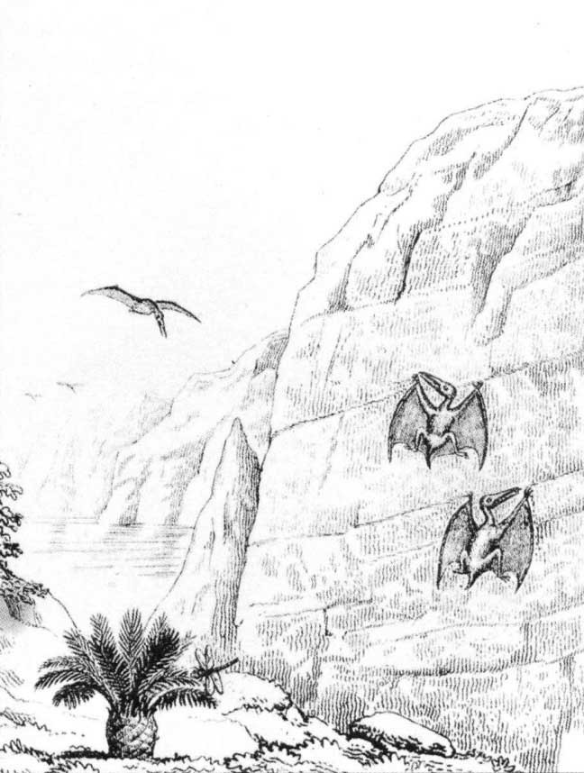 Pterosaurs_Buckland_1836_2