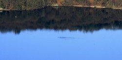 Lake Windermere Bowness Monster