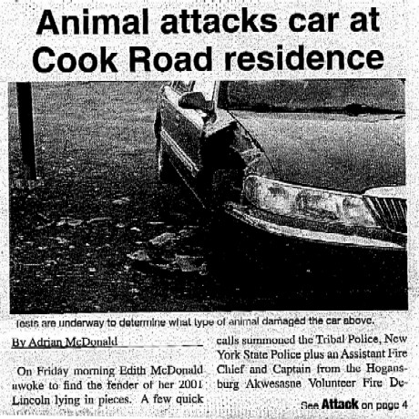 Mystery Animal Attack