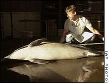 beaked whale obit