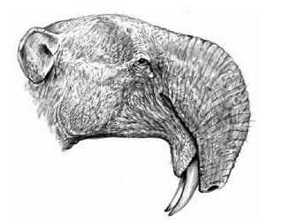 the-new-deinotherium.JPG