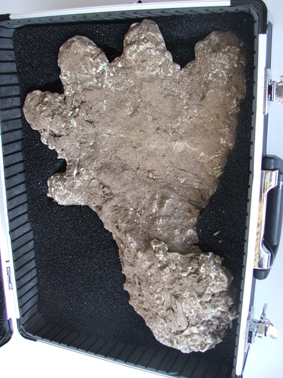 Malaysian Bigfoot Footprint Cast