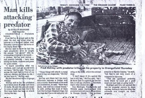 A newspaper clipping from my hometown newspaper in 1986-six years after the red wolf was declared extinct.