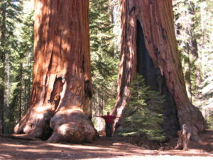 Sequoia Nat Park