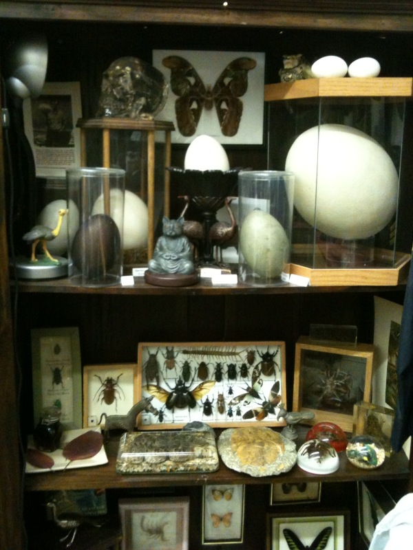 Curio Cabinet Decor On Pinterest Curio Cabinets Dining