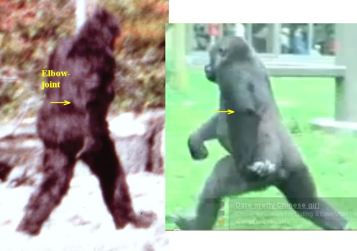 Patterson/Gimlin Film Images