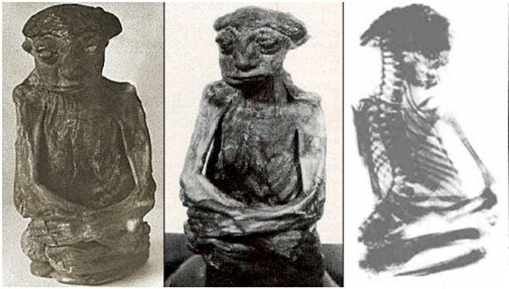 Pedro-Wyoming-mini-mummy-public-domain1