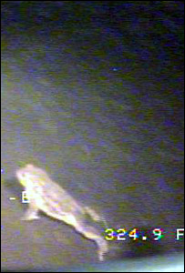 Loch Ness Toad