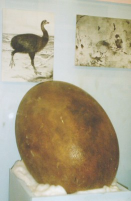 elephant bird egg1