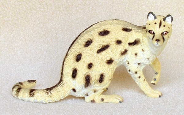 genet-small-spotted