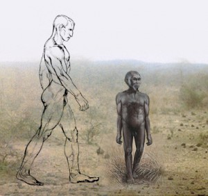Size comparison of Homo floresiensis with modern human