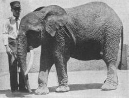 cryptomundo 187 confirmed africa has two elephant species