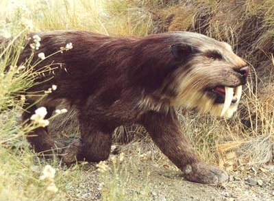 sabre-tooth cats