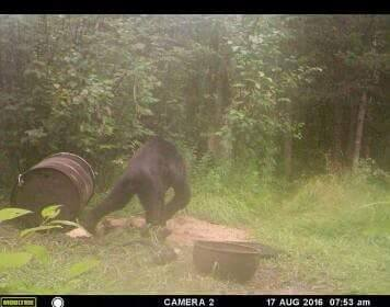 Update: Michigan UP Sasquatch Photo?