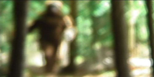 New Hampshire Bigfoot Video Footage